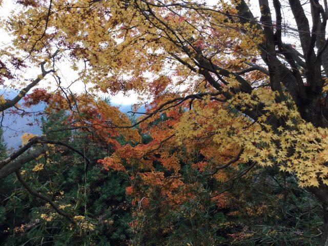 三峯神社 紅葉1
